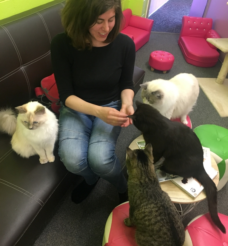 Traveling with chronic illness, cat cafe in New Zealand