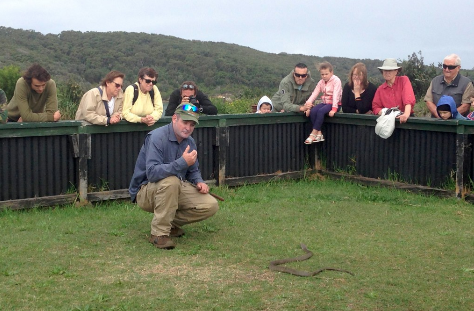 A Snakey handling a snake at the La Perouse Snake Show in Australia