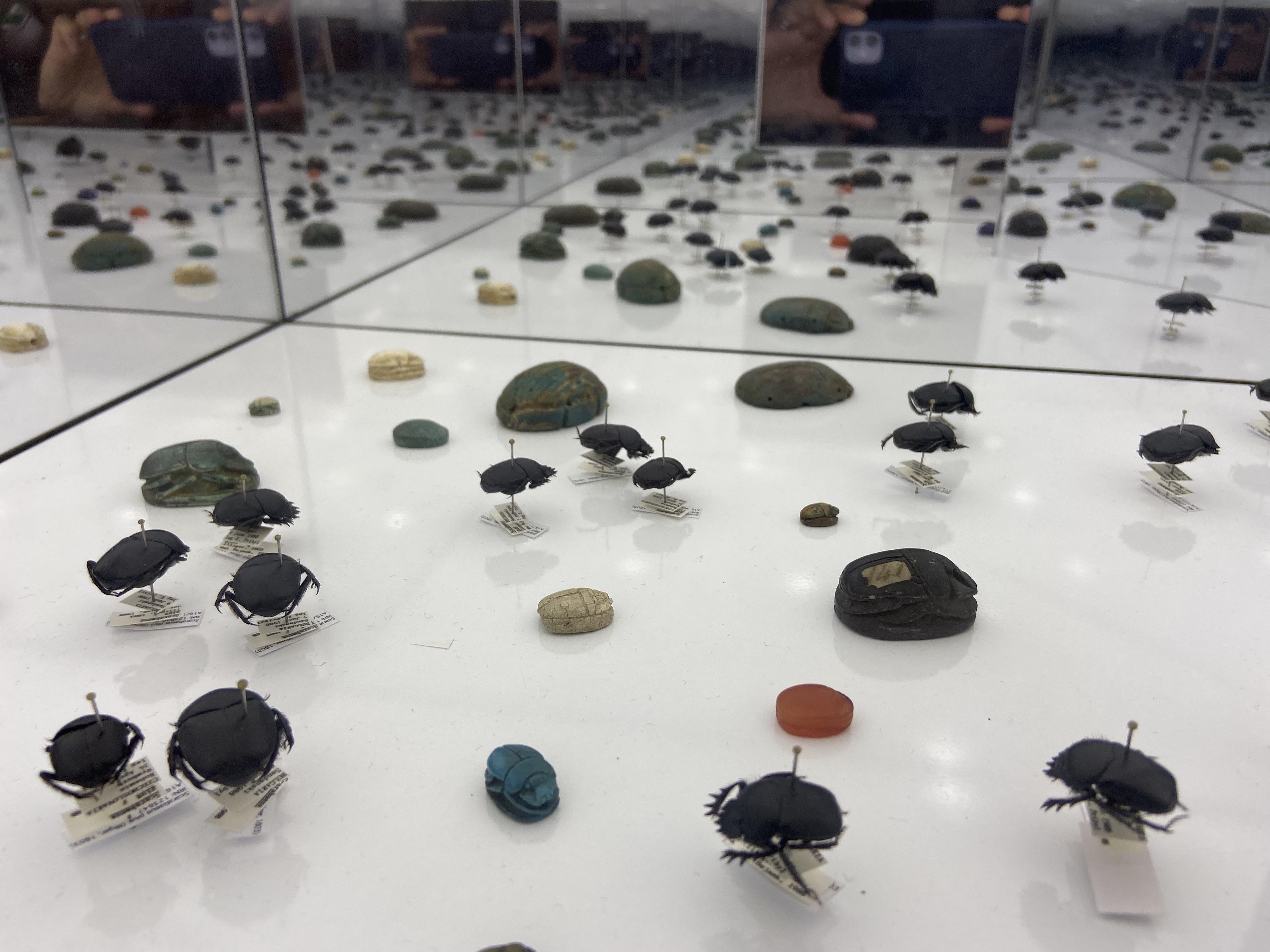 Nicholson Museum - dung beetles.jpg