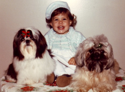Toddler and two shih tzus
